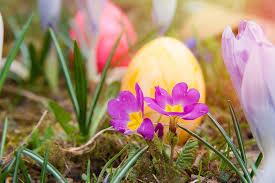 spring flower and egg
